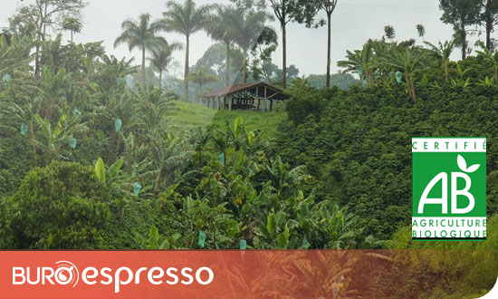 Plantation Colombie Excelso